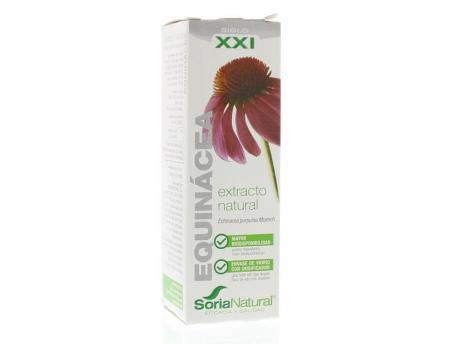 Echinacea purpurea XXI