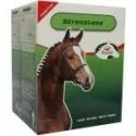 Paard Pony