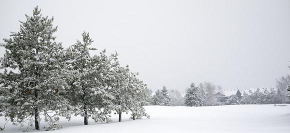 vitamine D in de winter